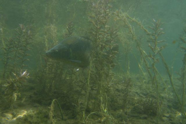 Karpfen Sundhäuser See